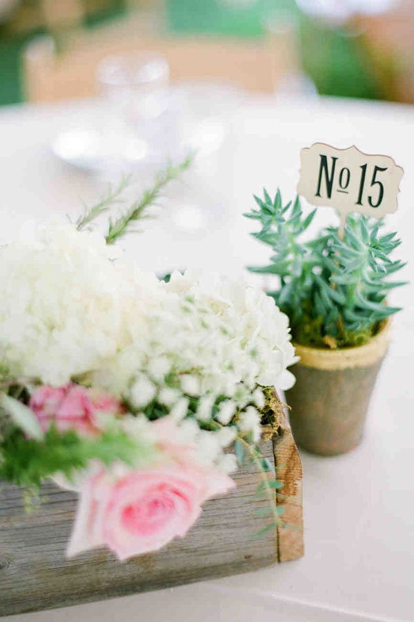 wedding seating chart ideas | small potted plant table number holder